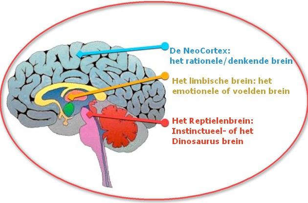 stop stress via reptielenbrein / hersenstam